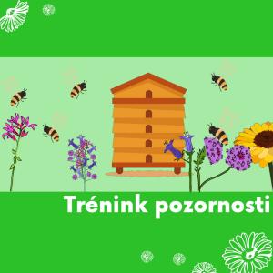 DDM ASTRA Zlín dětem: Trénink pozornosti - Včelky